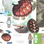 ours-tortue